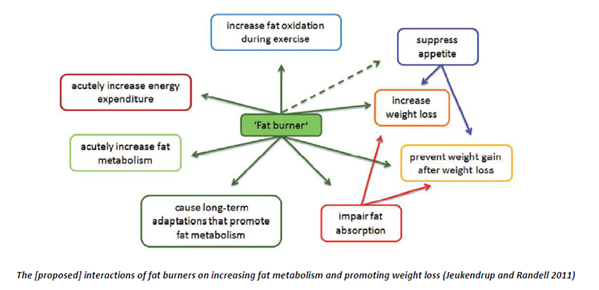 Do fat burning tablets really work quickly